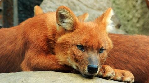 Прокуратура требует заблокировать сайт по продаже животных из Красной книги