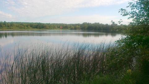 В Петровске на реке Медведица утонул мужчина