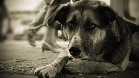 Жителя поселка Юриш решили наказать заизбитую камнем собаку