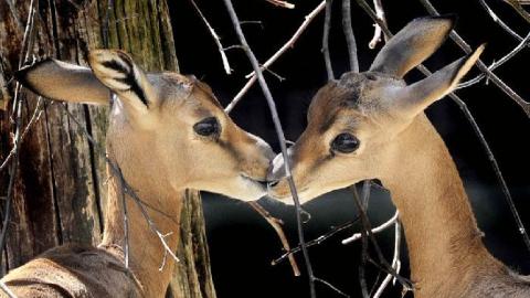 Саратовцам покажут фотографии рассвета на Волге и целующихся косуль