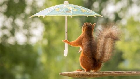 В Саратове ожидается дождь и усиление ветра