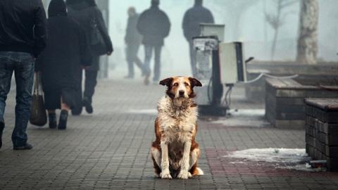 В Саратове за неделю поймали 61 бездомного пса