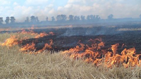 Саратовцев просят не жечь костры и мусор для предупреждения ландшафтных пожаров