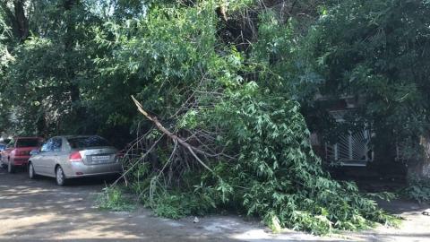 Ветер повалил в Саратове 13 ветхих деревьев