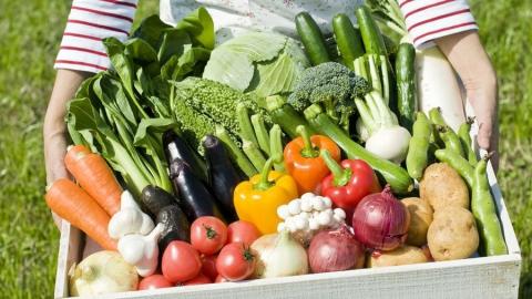 Саратовские аграрии собрали более 28 тысяч тонн овощей