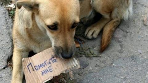 В Саратове поймали 16 бездомных псов