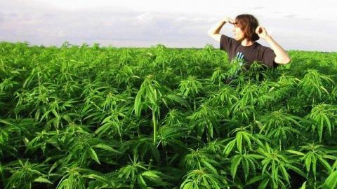 Саратовские полицейские изъяли из незаконного оборота 10 килограммов наркотиков