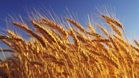 В Саратовской области обсудили технологии возделывания и уборки зерновых и масличных культур