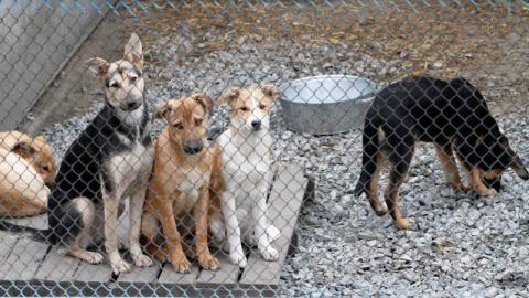 В Саратове за неделю поймали 47 бездомных собак