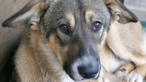 В Хвалынске школьнице выплатили 100 тысяч рублей за укусы собак
