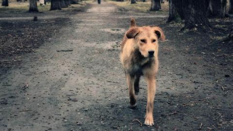 За неделю в Саратове поймали 20 бездомных собак