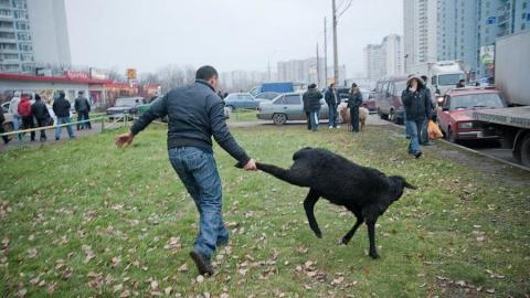 Саратовцы возмущены ритуальными убийствами баранов на тротуаре на глазах у детей