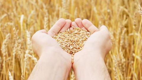 Саратовская область является лидером в ПФО по урожаю зерна