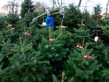 На Театральной площади распродадут елки по 100 рублей