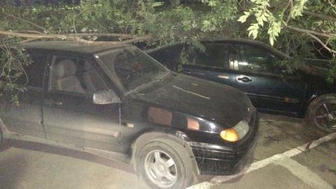 На Огородной дерево рухнуло на четыре машины