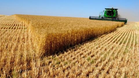 В Саратовской области собрали 5,8 миллионов тонн зерна
