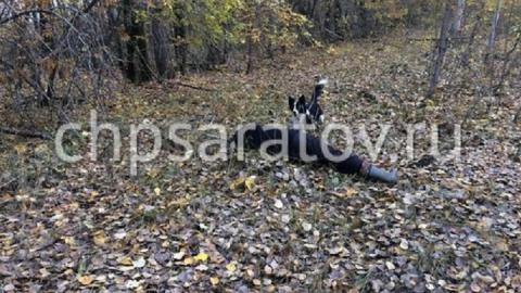 В лесу Новобурасского района нашли заблудившегося грибника