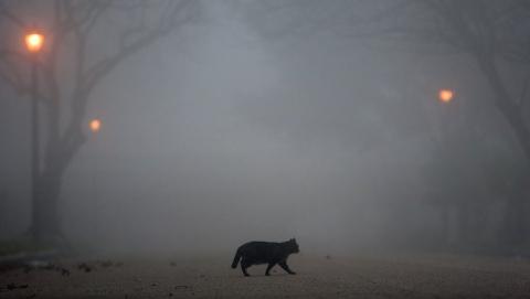 Туман иветер ухудшат аварийную обстановку насаратовских трассах