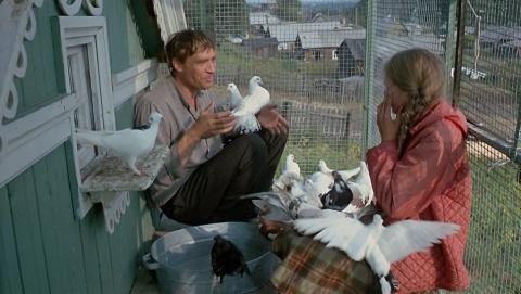 Граждане Энгельса похитили ипожарили шесть голубей