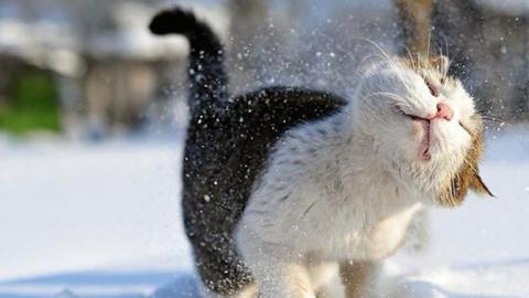 К середине недели в Саратове выпадет снег