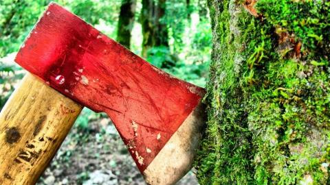 В районе турбазы «Островок» неизвестные уничтожили 80 деревьев