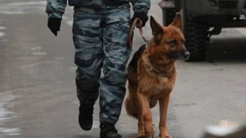 В администрации Саратова не нашли взрывное устройство
