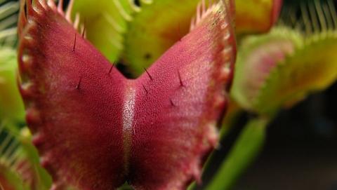 В первые выходные зимы в Саратове пройдет выставка редких растений