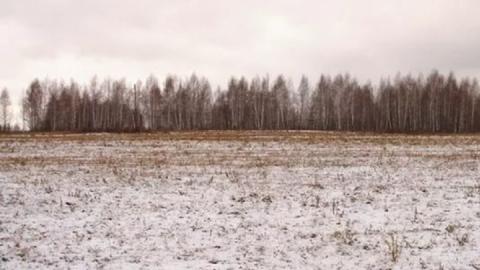 Охотники нашли в поле фрагменты тела мужчины