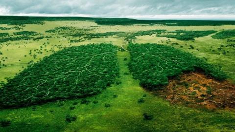 Саратовская область заняла 56 место в экологическом рейтинге