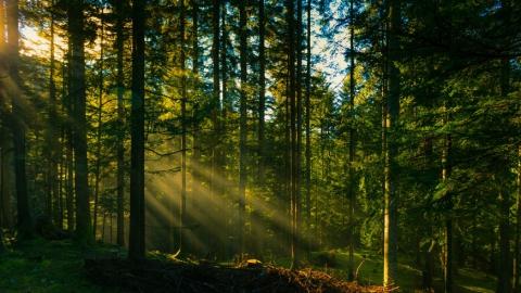 Природоохранная прокуратура вернула в собственность РФ лес в Усть-Курдюме