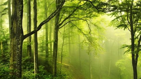Генпрокуратура через суд возвратила Энгельсу десять гектаров леса