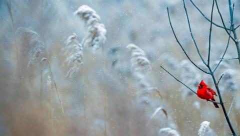 Саратовцам обещают снежную и морозную пятницу