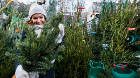 Саратовские елки в Москве продают по ценам до трех тысяч рублей