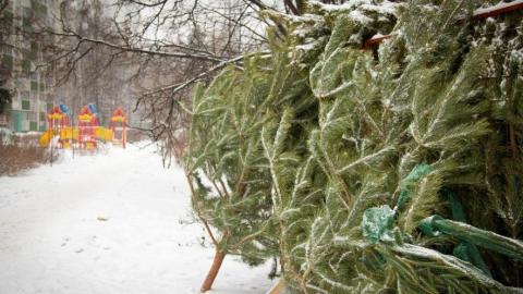 В Саратове задержали нелегального торговца елками