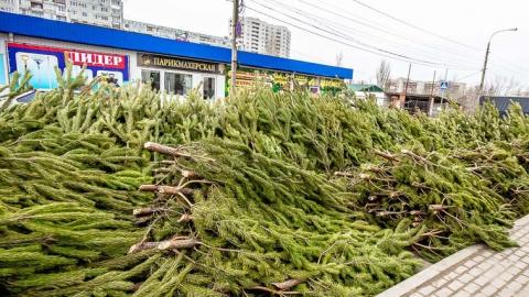 Саратовские полицейские нашли четыре незаконных елочных базара