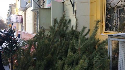 Саратовчанка раскритиковала администрацию за ликвидацию стихийных елочных базаров