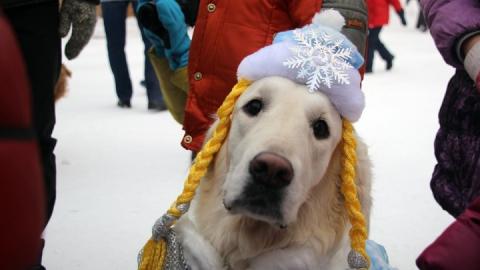 Новогодняя ночь в Саратове будет морозной