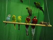 В Краеведческий музей приехали 60 попугаев. Фоторепортаж