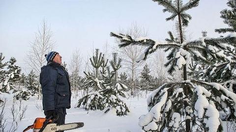 Перед Новым годом в области провели 600 рейдов патрулирования лесов