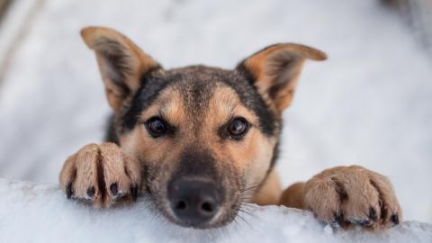 Саратовские спасатели достали пса из заброшенного погреба