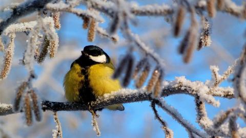 Саратовцам обещают морозы и небольшой снег
