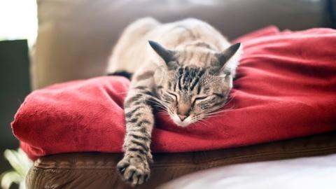 Саратовцам предлагают порисовать кошек и посмотреть фильм о работе мозга