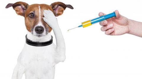 Саратовцам предлагают бесплатно привить собак и кошек против бешенства