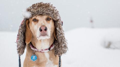 Саратовцев ждет морозная снежная неделя