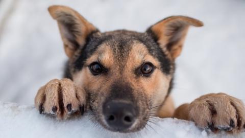 На отлов бродячих животных необходимо 8,6 миллиона рублей