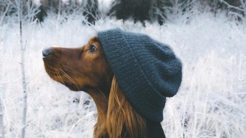 Саратовцам обещают продолжение аномальных морозов и отсутствие снега