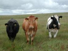 За прошлый год острых инфекционных заболеваний животных не зафиксировано