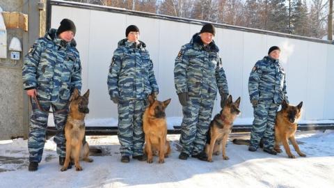 Саратовское УФСИН будет разводить собак для службы в других регионах