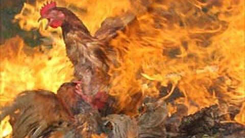 """Под Энгельсом произошел крупный пожар на """"Покровской птицефабрике"""""""