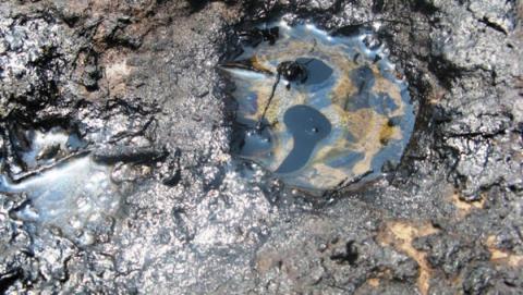 Арендатора оштрафовали за загрязнение нефтью участка земли